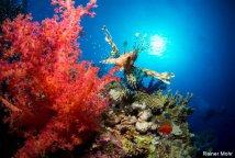 Zwei Wochentour Red Sea Highlights